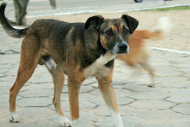 Street Dogs Colombia