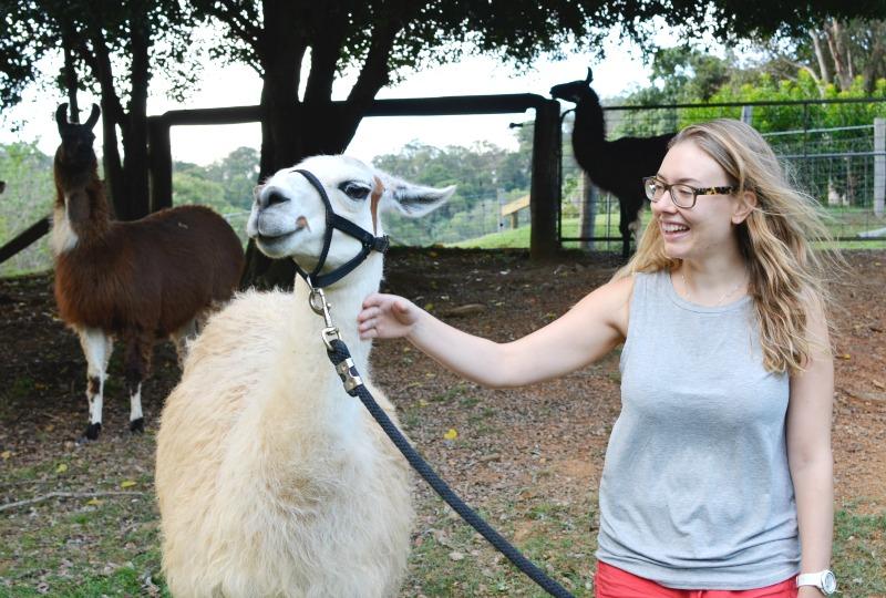 Llamas in Australia